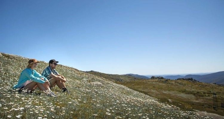 getting-amongst-the-views-and-wildflowers-in-Thredbo-1000x667
